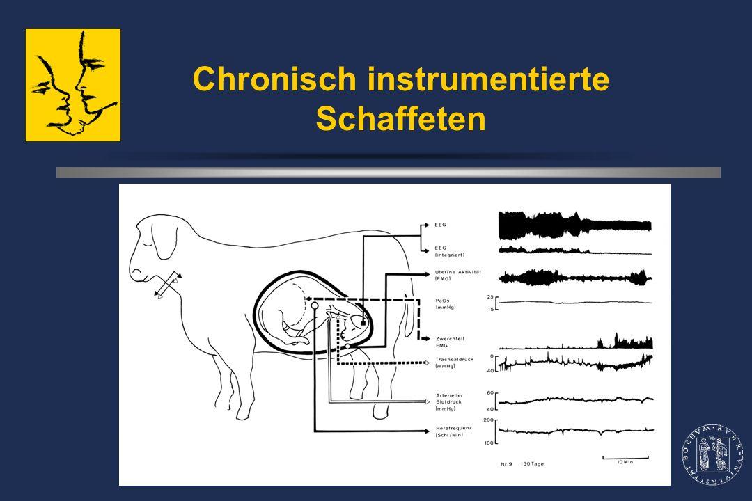 Chronisch instrumentierte Schaffeten