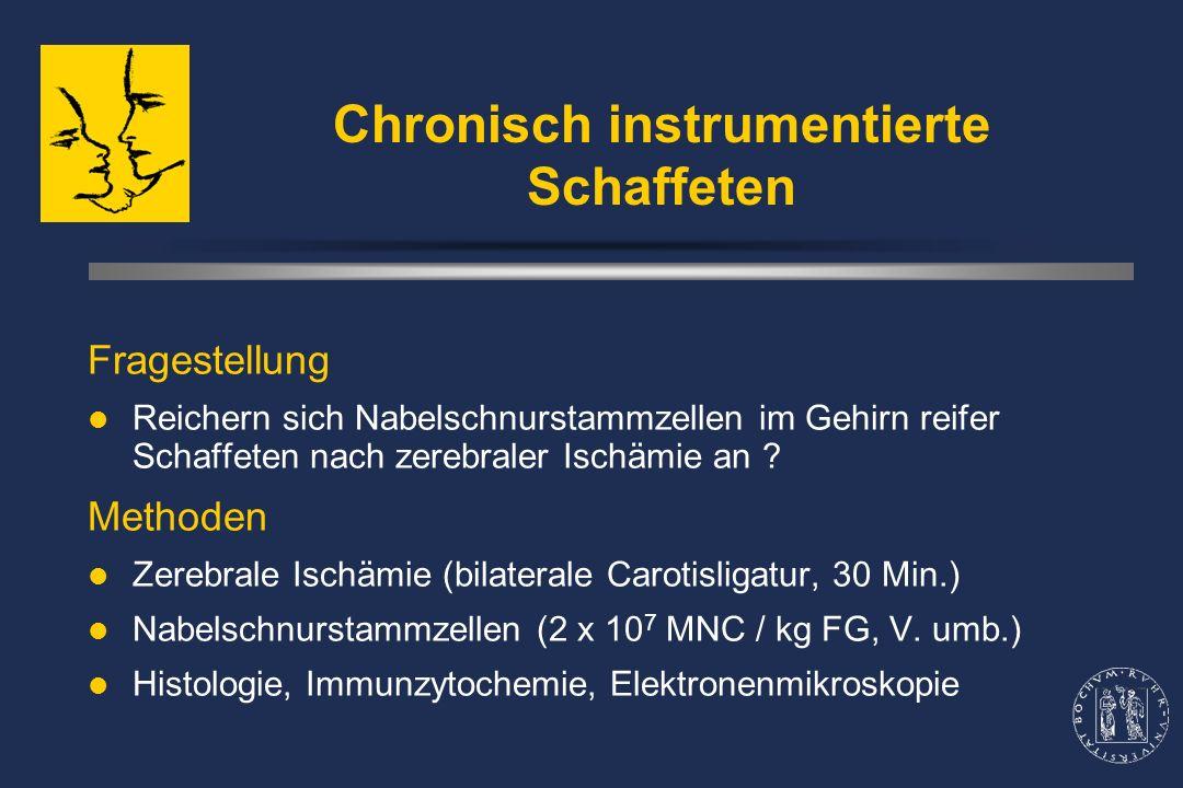 Chronisch instrumentierte Schaffeten Fragestellung Reichern sich Nabelschnurstammzellen im Gehirn reifer Schaffeten nach zerebraler Ischämie an .