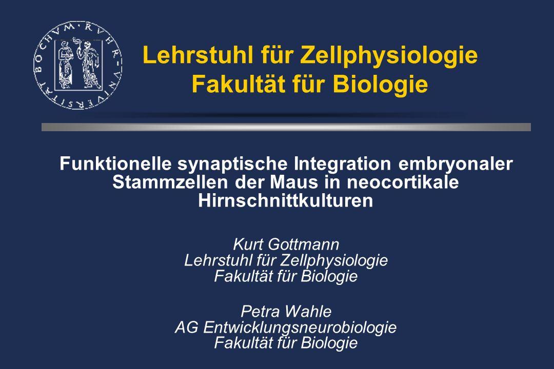 Hirnödem und Neuronaler Zellschaden - Zerebrale Ischämie 30 Min. -