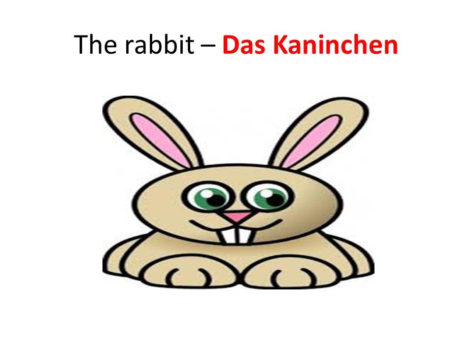 The rabbit – Das Kaninchen