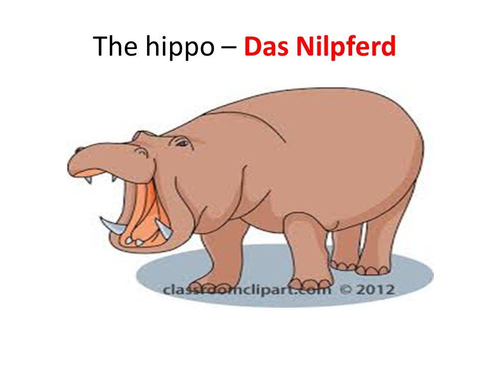 The hippo – Das Nilpferd