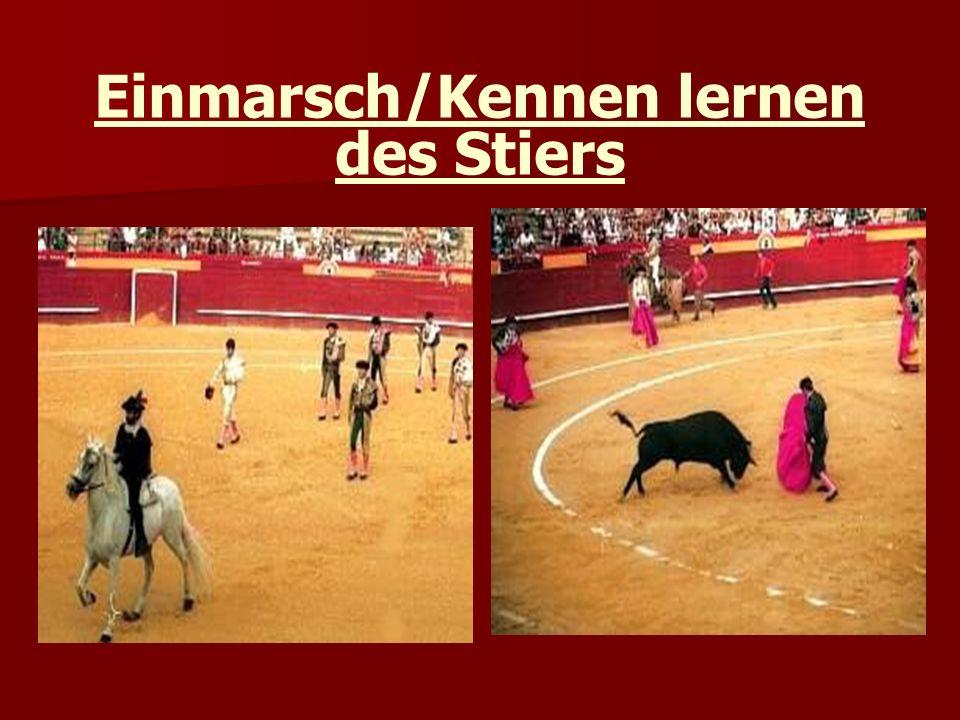 Einmarsch/Kennen lernen des Stiers