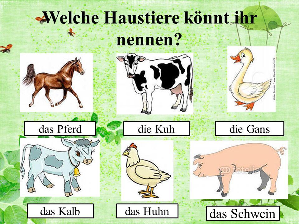 Welche Haustiere könnt ihr nennen das Pferddie Kuhdie Gans das Kalbdas Huhn das Schwein