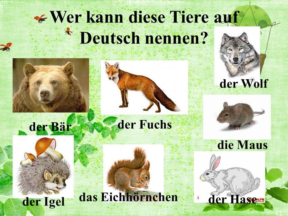 Wer kann diese Tiere auf Deutsch nennen.