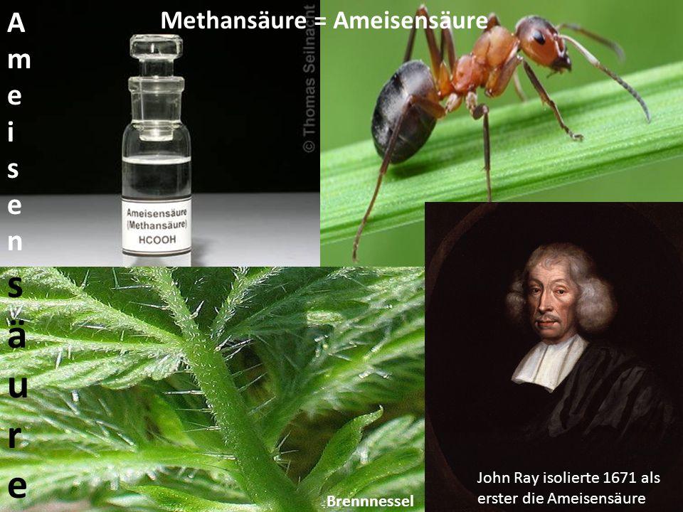 John Ray isolierte 1671 als erster die Ameisensäure AmeisensäureAmeisensäure Methansäure = Ameisensäure Brennnessel