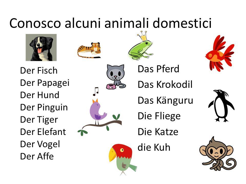 Conosco alcuni animali domestici Der Fisch Der Papagei Der Hund Der Pinguin Der Tiger Der Elefant Der Vogel Der Affe Das Pferd Das Krokodil Das Känguru Die Fliege Die Katze die Kuh