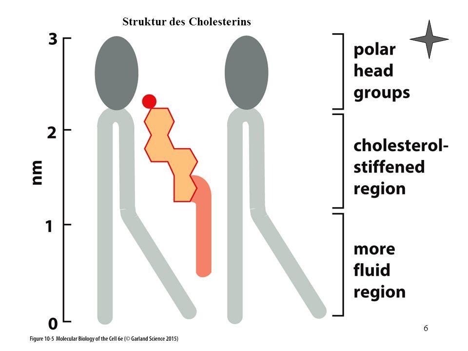 Struktur des Cholesterins 6