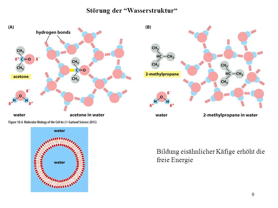 Störung der Wasserstruktur 9 Bildung eisähnlicher Käfige erhöht die freie Energie