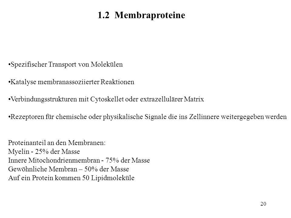 20 1.2 Membraproteine Spezifischer Transport von Molekülen Katalyse membranassoziierter Reaktionen Verbindungsstrukturen mit Cytoskellet oder extrazel