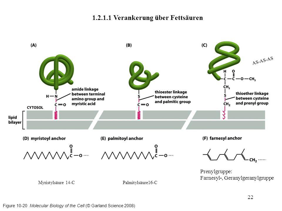 Figure 10-20 Molecular Biology of the Cell (© Garland Science 2008) 1.2.1.1 Verankerung über Fettsäuren 22 Myristylsäure 14-CPalmitylsäure16-C Prenylg