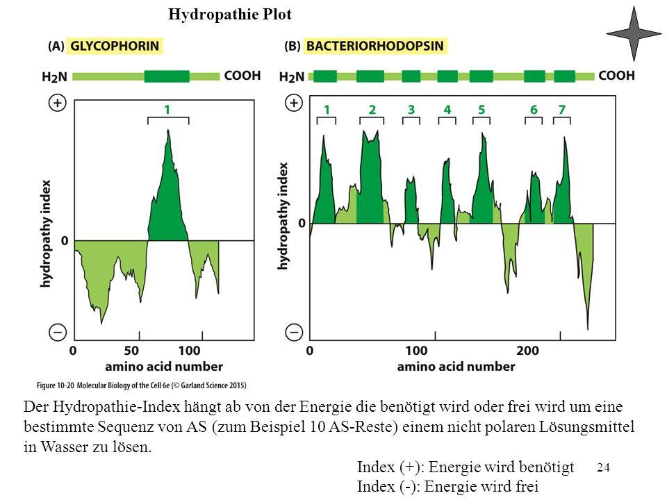 Hydropathie Plot 24 Der Hydropathie-Index hängt ab von der Energie die benötigt wird oder frei wird um eine bestimmte Sequenz von AS (zum Beispiel 10 AS-Reste) einem nicht polaren Lösungsmittel in Wasser zu lösen.
