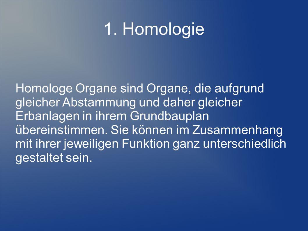 1. Homologie Homologe Organe sind Organe, die aufgrund gleicher Abstammung und daher gleicher Erbanlagen in ihrem Grundbauplan übereinstimmen. Sie kön