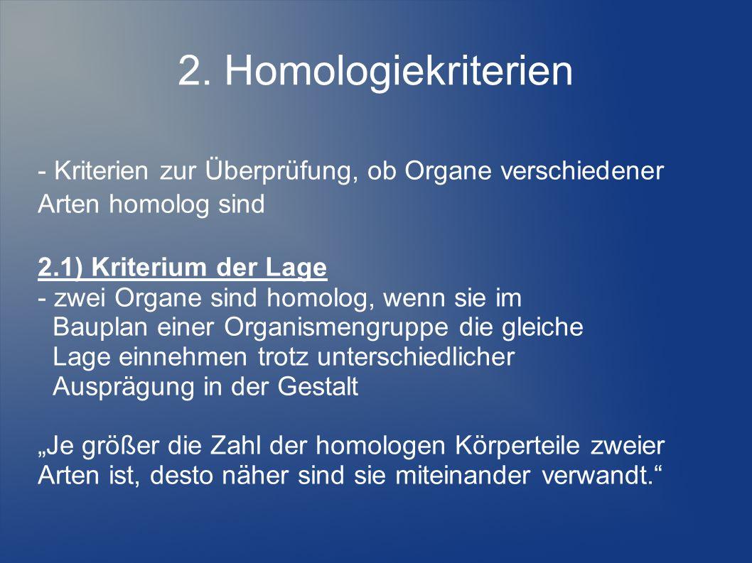 2. Homologiekriterien - Kriterien zur Überprüfung, ob Organe verschiedener Arten homolog sind 2.1) Kriterium der Lage - zwei Organe sind homolog, wenn