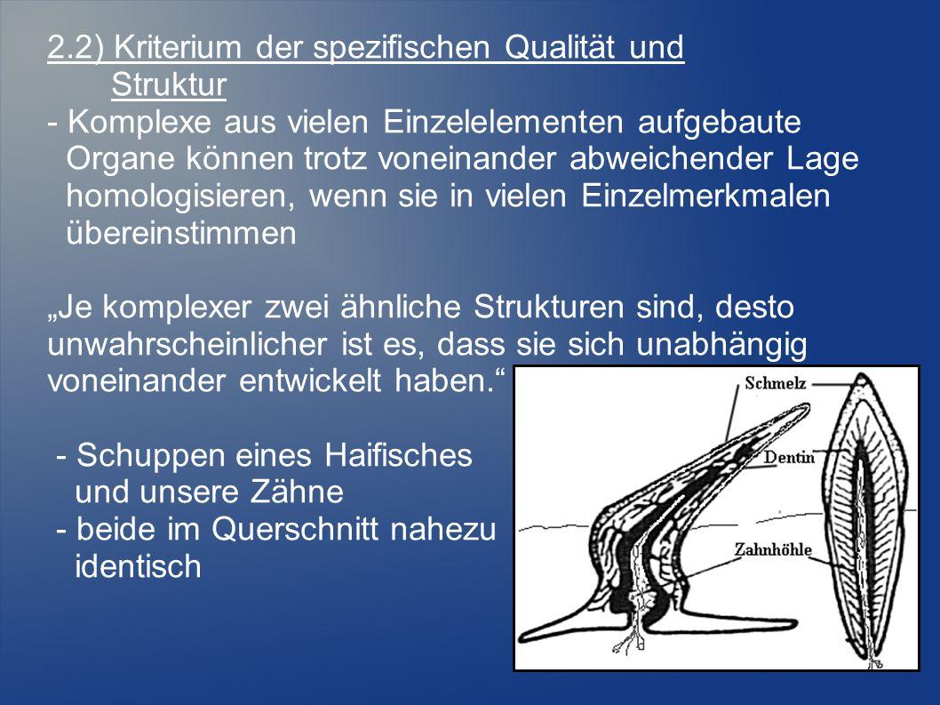 """2.2) Kriterium der spezifischen Qualität und Struktur - Komplexe aus vielen Einzelelementen aufgebaute Organe können trotz voneinander abweichender Lage homologisieren, wenn sie in vielen Einzelmerkmalen übereinstimmen """"Je komplexer zwei ähnliche Strukturen sind, desto unwahrscheinlicher ist es, dass sie sich unabhängig voneinander entwickelt haben. - Schuppen eines Haifisches und unsere Zähne - beide im Querschnitt nahezu identisch"""