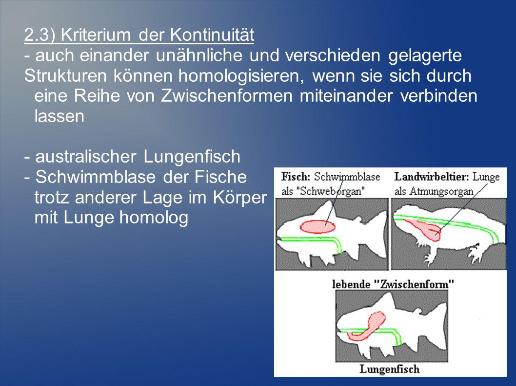 2.3) Kriterium der Kontinuität - auch einander unähnliche und verschieden gelagerte Strukturen können homologisieren, wenn sie sich durch eine Reihe von Zwischenformen miteinander verbinden lassen - australischer Lungenfisch - Schwimmblase der Fische trotz anderer Lage im Körper mit Lunge homolog