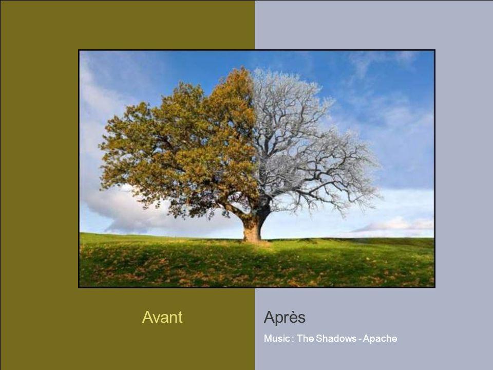 AvantAprès Music : The Shadows - Apache