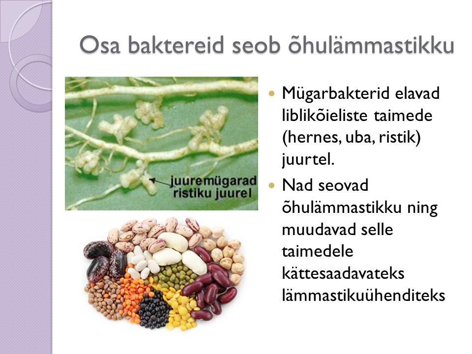 Osa baktereid seob õhulämmastikku Mügarbakterid elavad liblikõieliste taimede (hernes, uba, ristik) juurtel. Nad seovad õhulämmastikku ning muudavad s