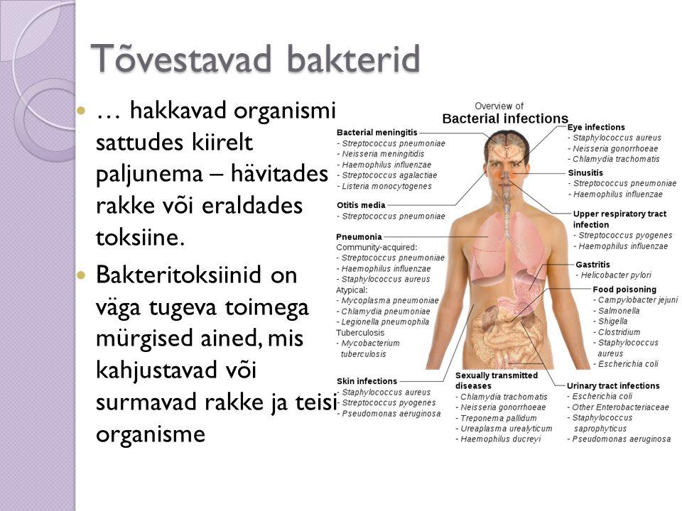 … hakkavad organismi sattudes kiirelt paljunema – hävitades rakke või eraldades toksiine. Bakteritoksiinid on väga tugeva toimega mürgised ained, mis