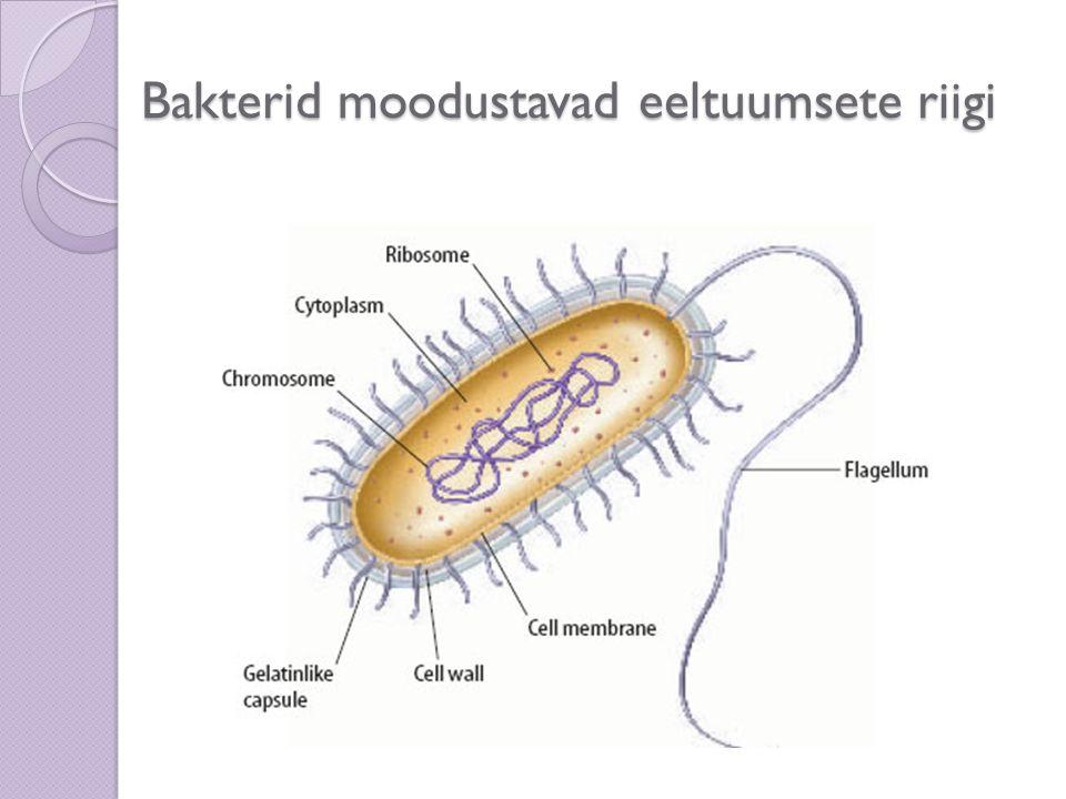 Bakterid moodustavad eeltuumsete riigi