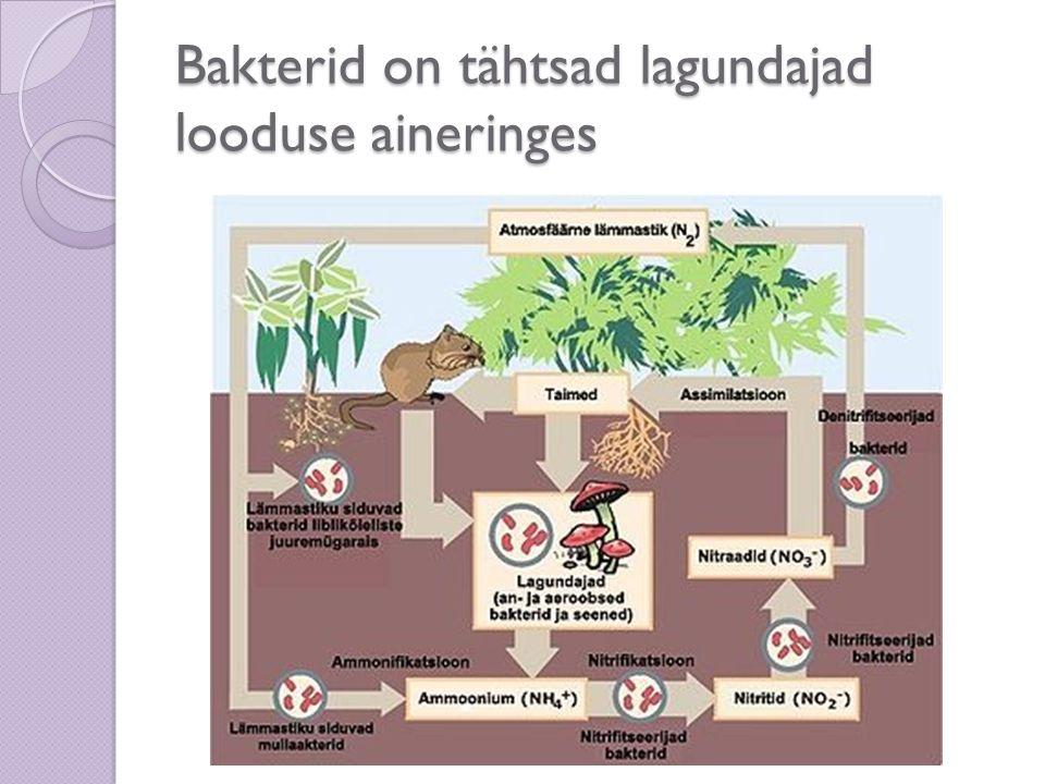 Osa baktereid seob õhulämmastikku Mügarbakterid elavad liblikõieliste taimede (hernes, uba, ristik) juurtel.