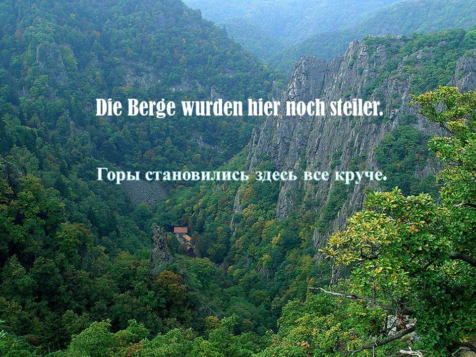 die Tannenwälder wogten unten wie ein grünes Meer.