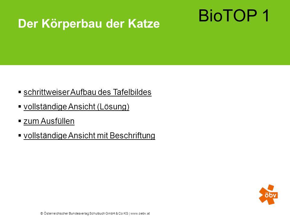 © Österreichischer Bundesverlag Schulbuch GmbH & Co KG | www.oebv.at BioTOP 1 Der Körperbau der Katze  schrittweiser Aufbau des Tafelbildesschrittwei