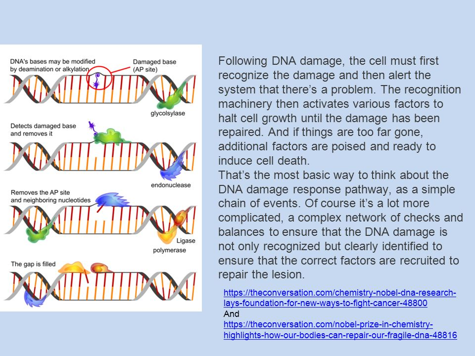 Following DNA damage, the cell must first recognize the damage and then alert the system that there's a problem.