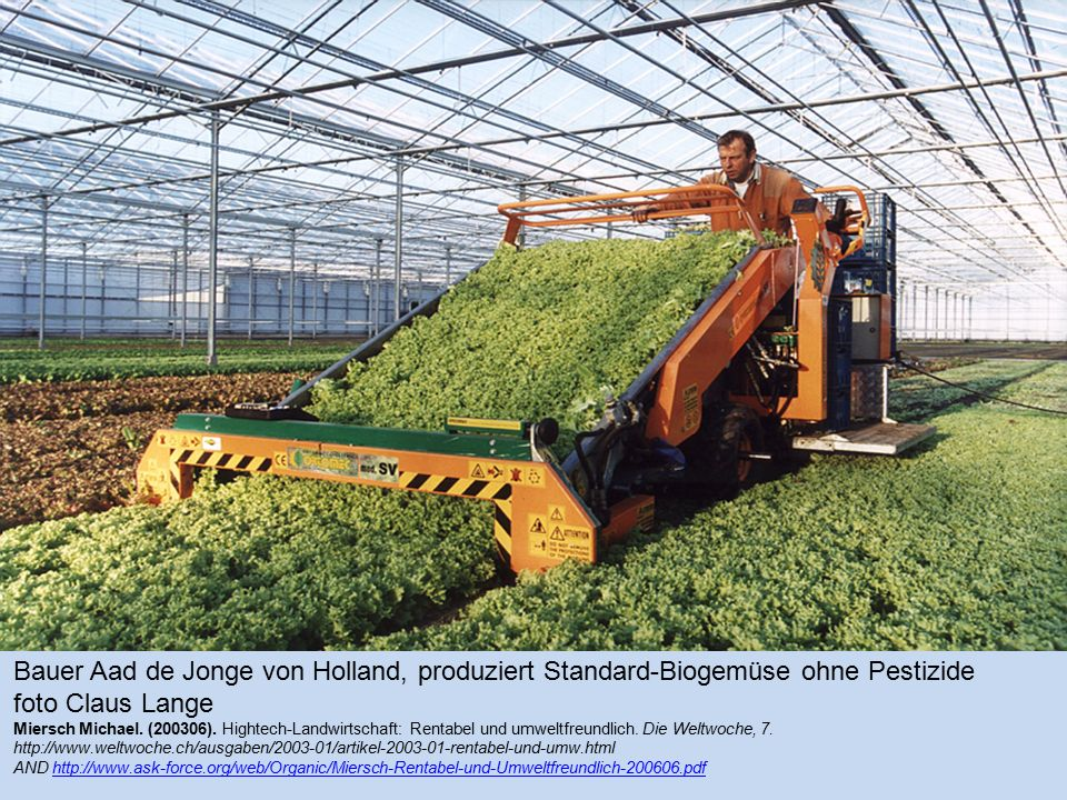 Bauer Aad de Jonge von Holland, produziert Standard-Biogemüse ohne Pestizide foto Claus Lange Miersch Michael.