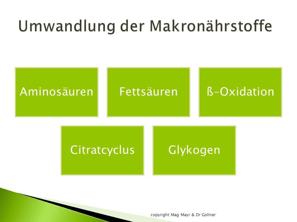 AminosäurenFettsäurenß-Oxidation CitratcyclusGlykogen copyright Mag Mayr & Dr Gollner