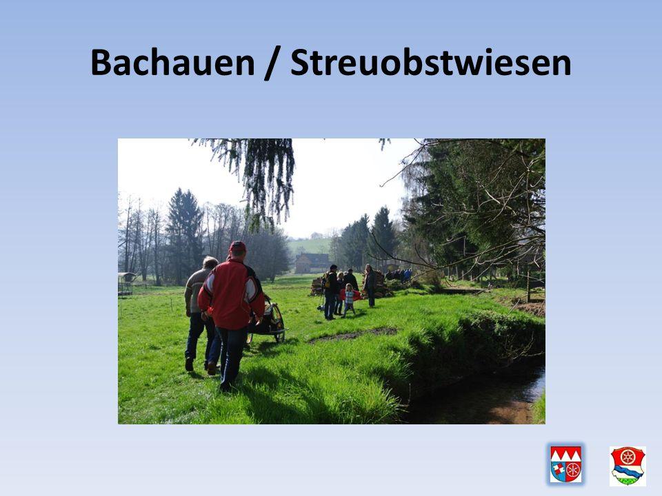 Bachauen / Streuobstwiesen