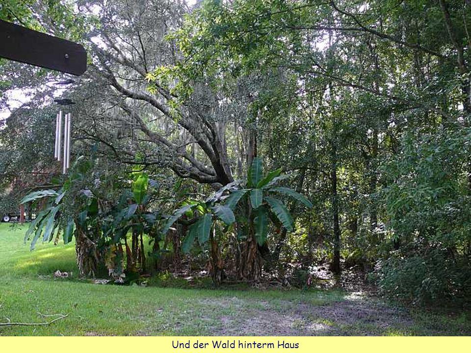 Und der Wald hinterm Haus