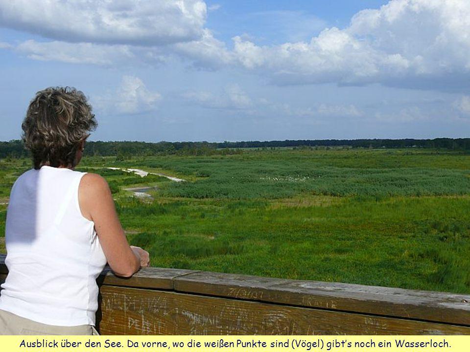 Ausblick über den See. Da vorne, wo die weißen Punkte sind (Vögel) gibt's noch ein Wasserloch.