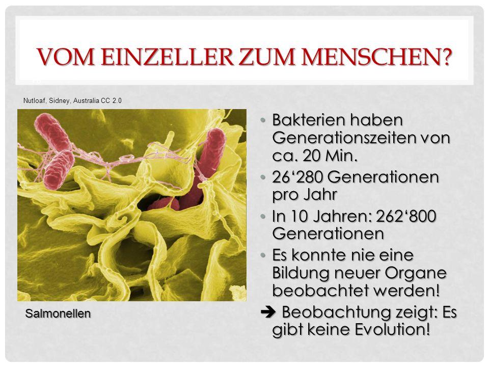 VOM EINZELLER ZUM MENSCHEN. Bakterien haben Generationszeiten von ca.