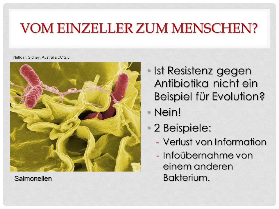 VOM EINZELLER ZUM MENSCHEN. Ist Resistenz gegen Antibiotika nicht ein Beispiel für Evolution.