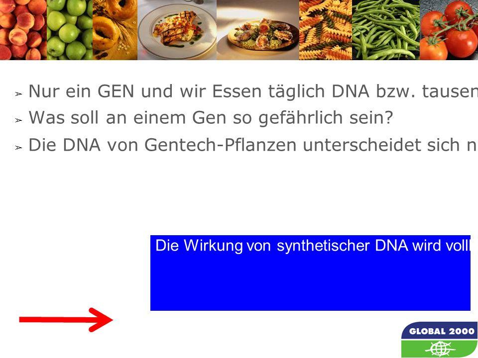 24 Die Wirkung von synthetischer DNA wird vollkommen aus der Risikoabschätzung von GVOs durch die EFSA ausgeblendet, obwohl man weiß, dass: ➢ Nur ein GEN und wir Essen täglich DNA bzw.