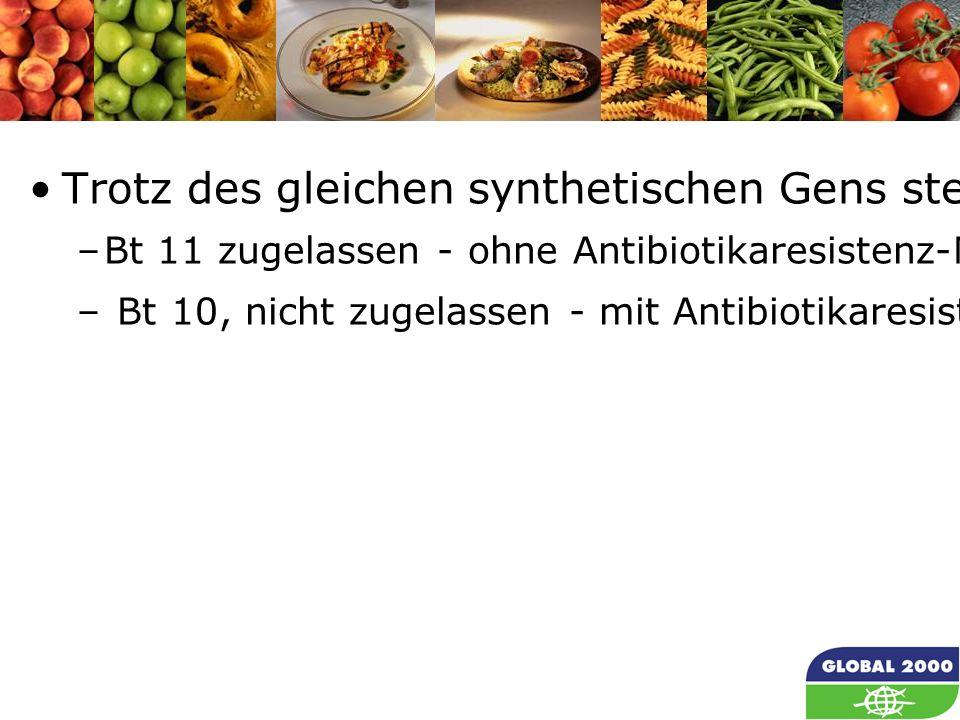 33 Trotz des gleichen synthetischen Gens stellt jeder Treffer in einer Zelle ein unterschiedliches EVENT/EREIGNIS dar: –Bt 11 zugelassen - ohne Antibiotikaresistenz-Markersequenz – Bt 10, nicht zugelassen - mit Antibiotikaresistenz-Markersequenz