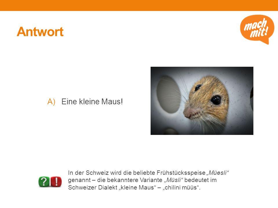 Antwort A)Eine kleine Maus.