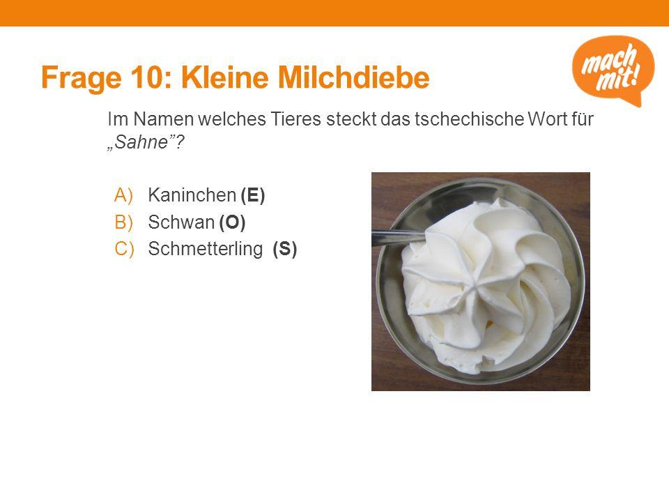 """Frage 10: Kleine Milchdiebe Im Namen welches Tieres steckt das tschechische Wort für """"Sahne ."""