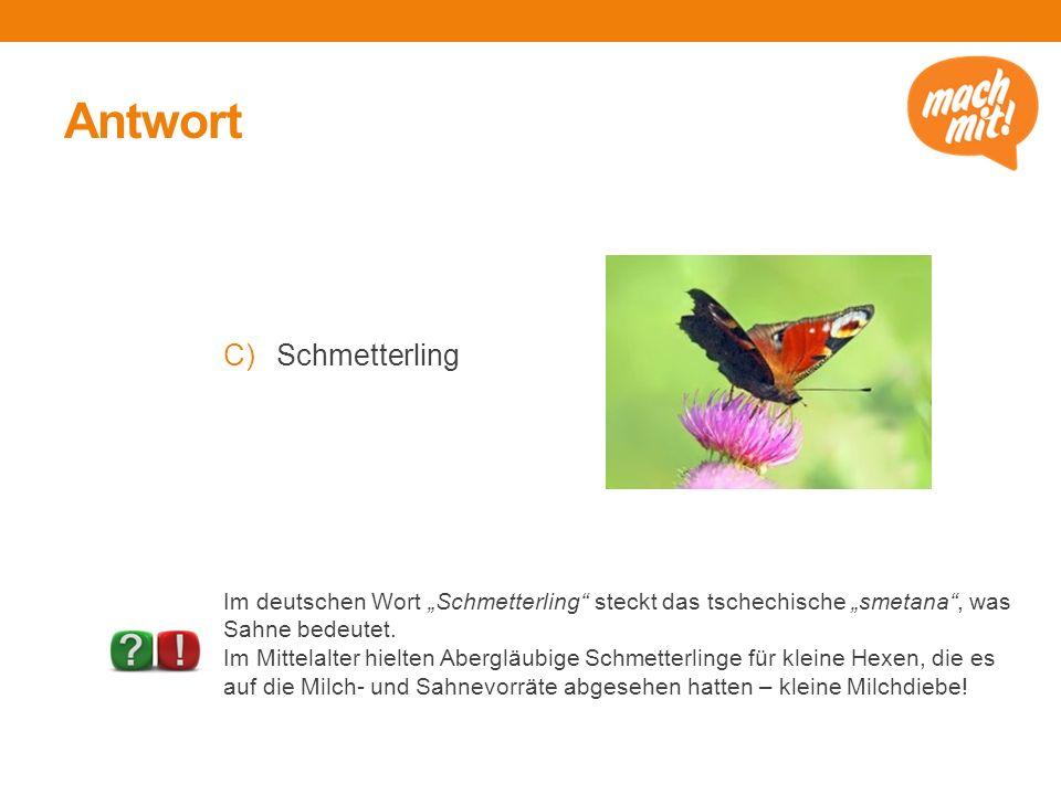 """Antwort C)Schmetterling Im deutschen Wort """"Schmetterling steckt das tschechische """"smetana , was Sahne bedeutet."""