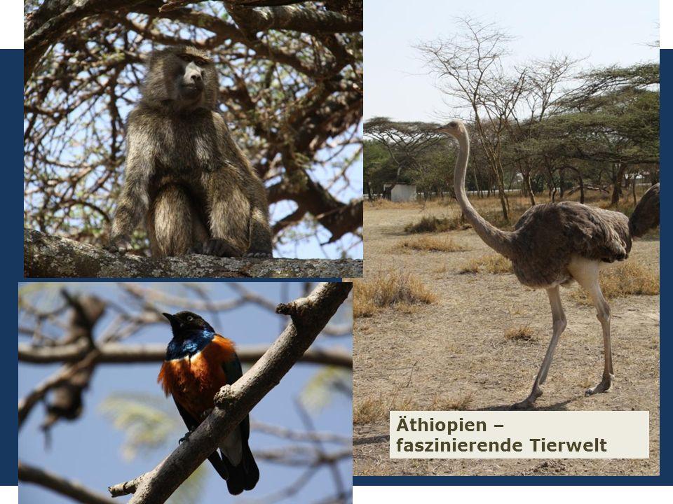 7 We are one EJW-Weltdienst Jahresaktion 2016-2017 Äthiopien: Hilfe für Straßenkinder und Seed Money Fritz Leng Äthiopien – faszinierende Tierwelt