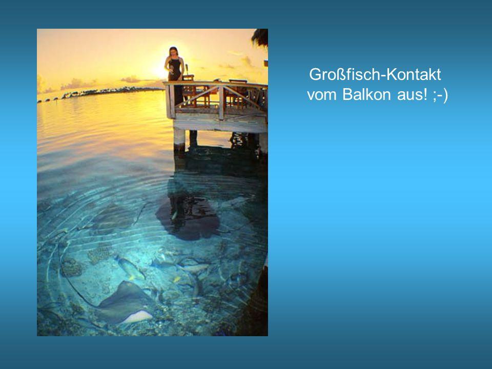 Großfisch-Kontakt vom Balkon aus! ;-)