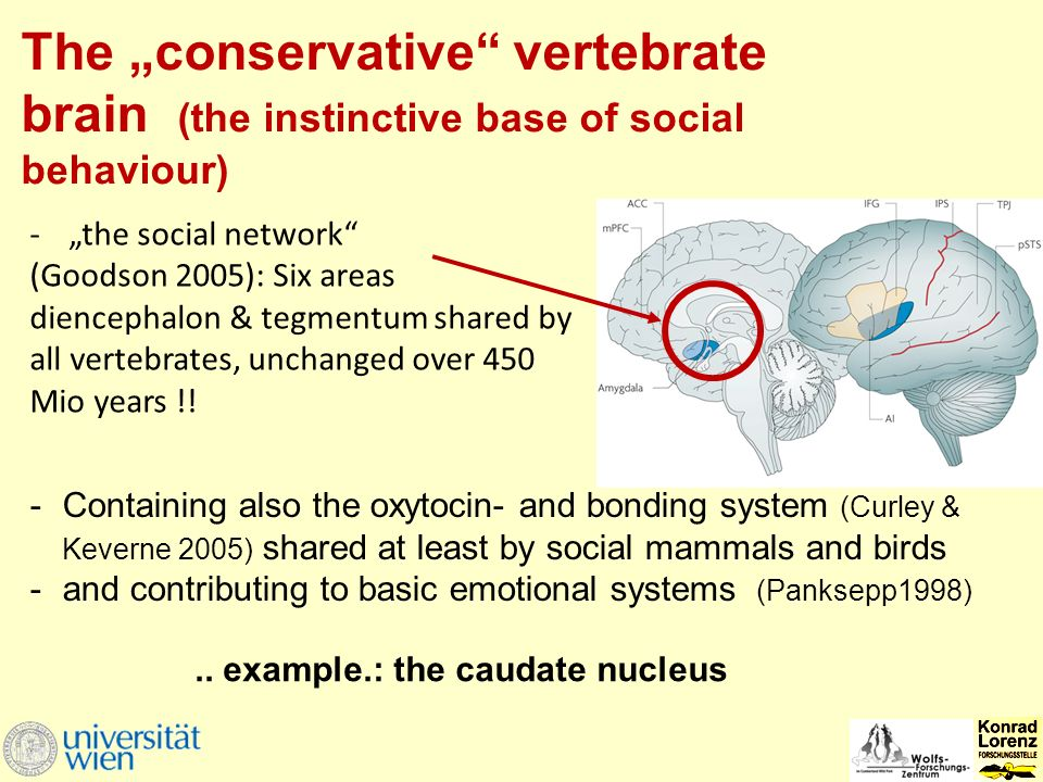 "-Containing also the oxytocin- and bonding system (Curley & Keverne 2005) shared at least by social mammals and birds -and contributing to basic emotional systems (Panksepp1998) -""the social network (Goodson 2005): Six areas diencephalon & tegmentum shared by all vertebrates, unchanged over 450 Mio years !."