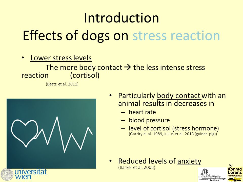 Introduction Effects of dogs on stress reaction Lower stress levels The more body contact  the less intense stress reaction (cortisol) (Beetz et al.