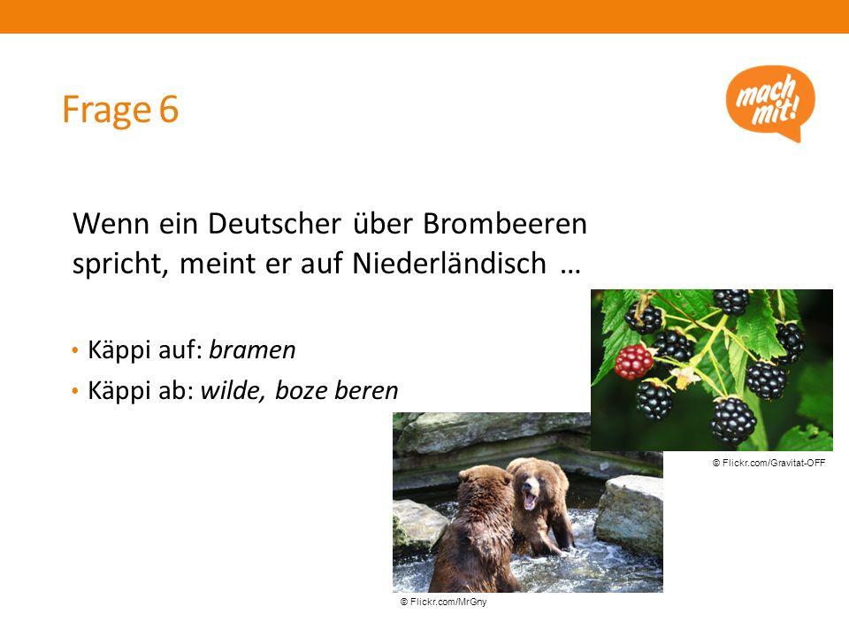 Frage 6 Käppi auf: bramen Käppi ab: wilde, boze beren Wenn ein Deutscher über Brombeeren spricht, meint er auf Niederländisch … © Flickr.com/Gravitat-OFF © Flickr.com/MrGny