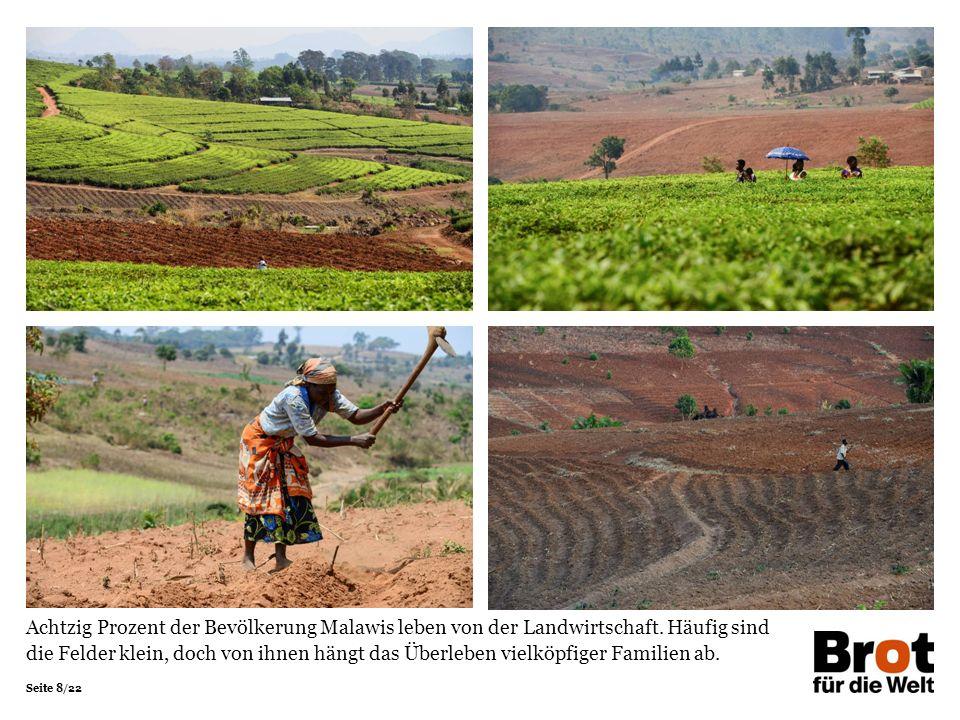 Seite 8/22 Achtzig Prozent der Bevölkerung Malawis leben von der Landwirtschaft.
