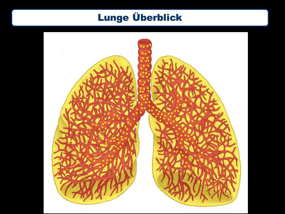 Lunge Überblick
