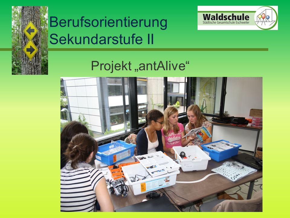 "Berufsorientierung Sekundarstufe II Projekt ""antAlive"