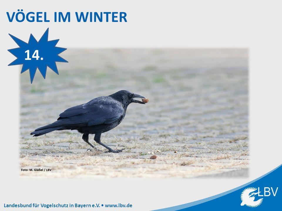 Landesbund für Vogelschutz in Bayern e.V. www.lbv.de 14.