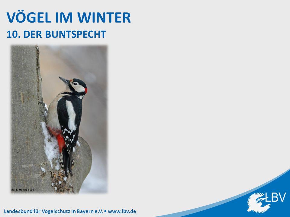 Landesbund für Vogelschutz in Bayern e.V. www.lbv.de