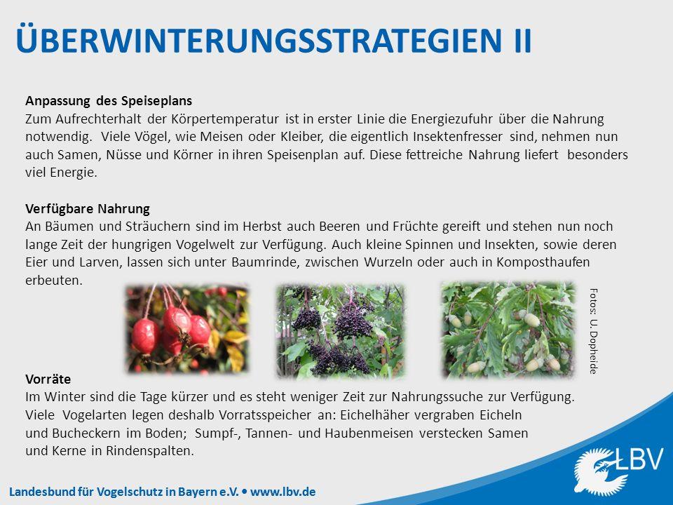 Landesbund für Vogelschutz in Bayern e.V.